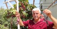 Silifke'de Üzümler Dalında Kurudu